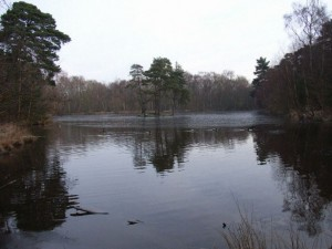 Heath Pool in Finchampstead. Copyright Andrew Smith